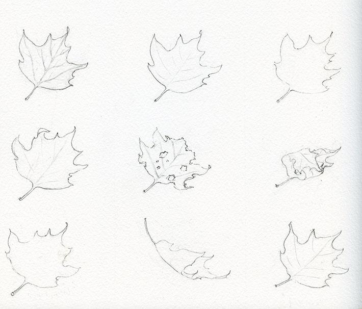 Рисованные картинки листьев карандашом поэтапно